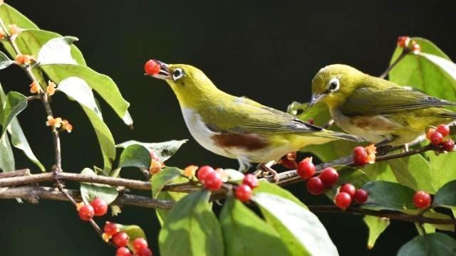 心理测试:下面四组鸟中你喜欢哪一对,测你最近有什么好运降临